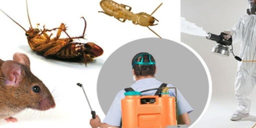 ارخص شركة مكافحة حشرات بالرياض