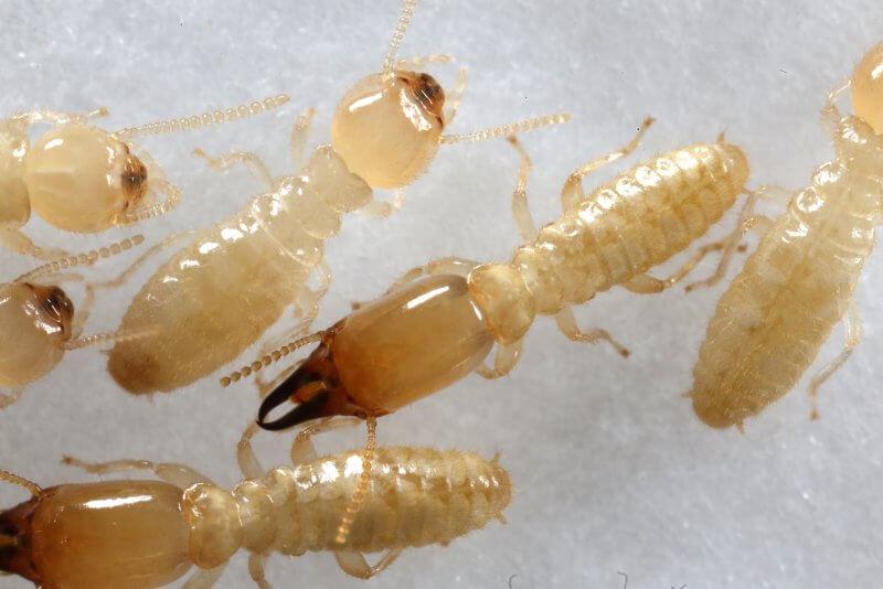 أفضل المبيدات الحشرية للنمل