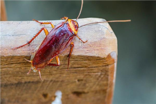 التخلص من الحشرات المنزلية