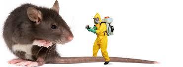 شركة مكافحة الفئران بالرياض 0538156829