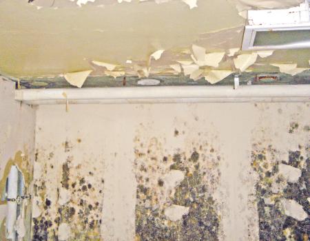اضرار المياه المالحة على المنازل