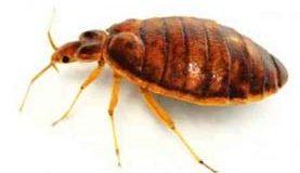 Cockroaches2