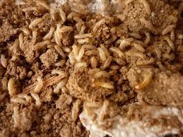 شركة مكافحة النمل الابيض بالرياض -0539405627